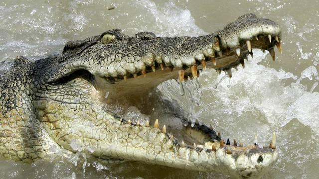 Bisweile erschreckend: Eine Begegnung mit einem Krokodil (Symbolbild)