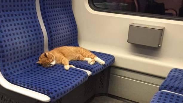 Die Katze schien sich in der Bahn wohlzufühlen.