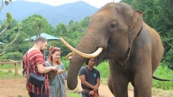 Patara Elefant Farm