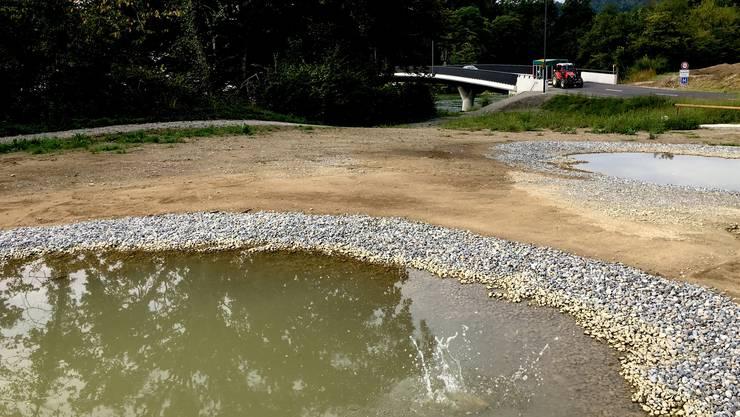 Das neue Refugium für Amphibien bei der Reussbrücke im Gnadenthal.