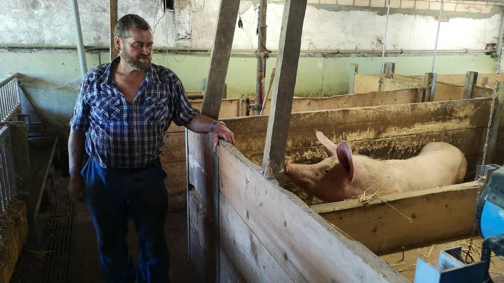Schweinebauer Kaspar Hofer in seinem Stall. Ihm macht der Gestank nichts aus.