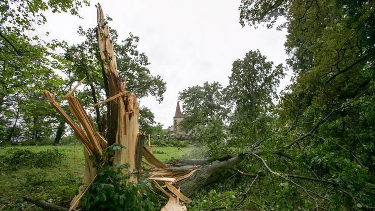 Der Sturm verwüstet den Park vom Schloss Hallwyl - viele alte Bäume knickten ein.