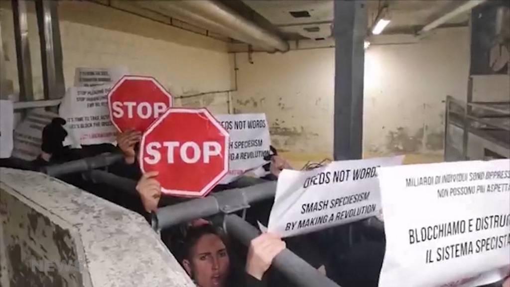 Nach Schlachthof-Protesten: 34 Tierschützer vor Gericht