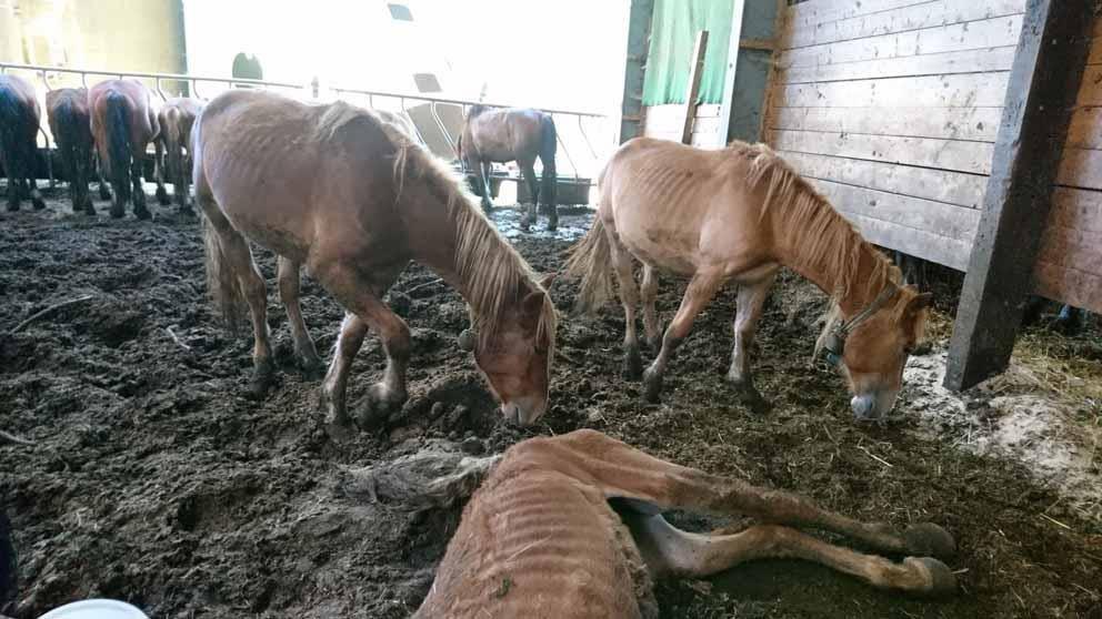 Pferdezüchter quält Tiere zu Tode (© ZVG Verein gegen Tierfabriken)
