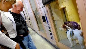Findeltiere im Tierheim des Tierschutzes beider Basel erhalten Besuch
