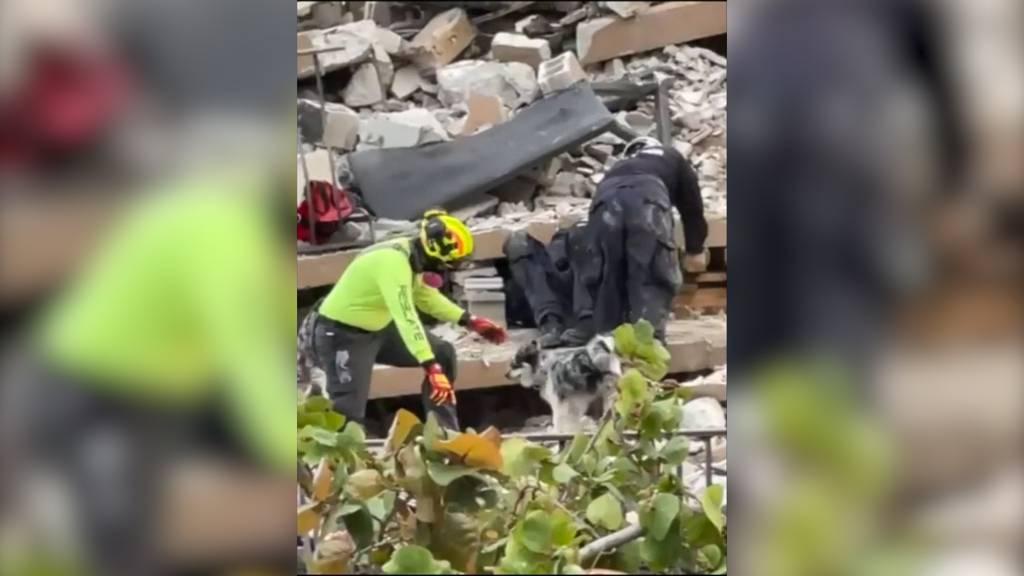 Hauseinsturz in Miami: Rettungshund «Oreo» sucht nach Vermissten