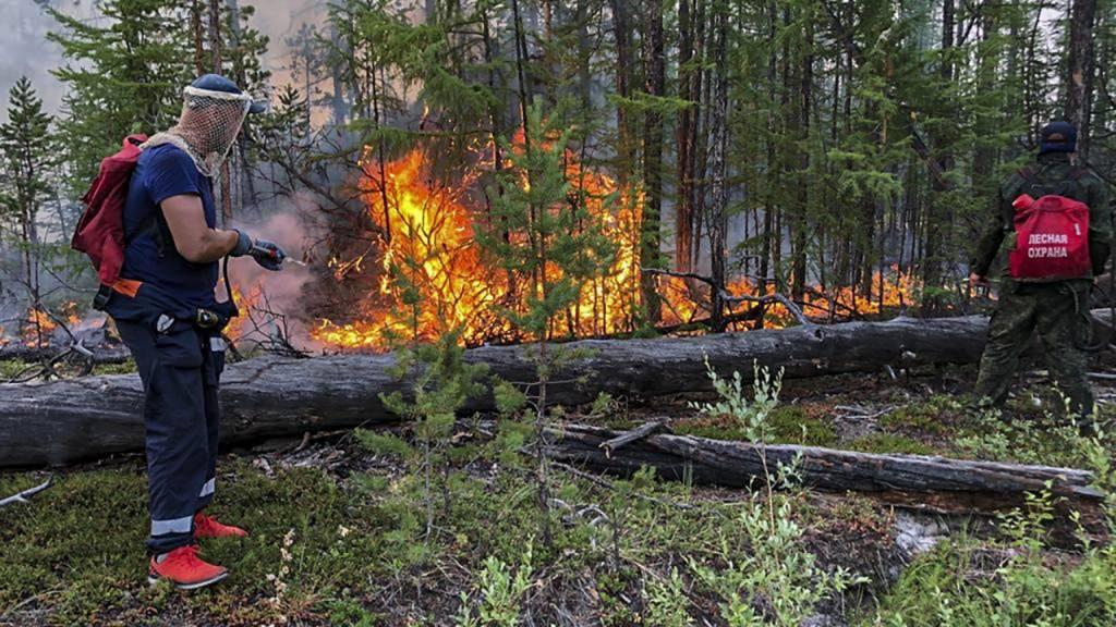 Bei den Busch- und Waldbränden in Russland ist eine rekordhohe Zahl von Wäldern zerstört worden. (Archivbild)