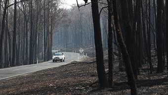 Zahlreiche Buschfeuer haben in den letzten Monaten im Südosten Australiens gewütet. Die Regierung des Bundesstaates New South Wales lässt die Brände und deren Hintergrund nun untersuchen. (Archivbild)