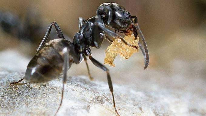Im 71-seitigen Jahresbericht des kantonalen Amts für Verbraucherschutz sind 30 Zeilen den kleinen Insekten gewidmet.