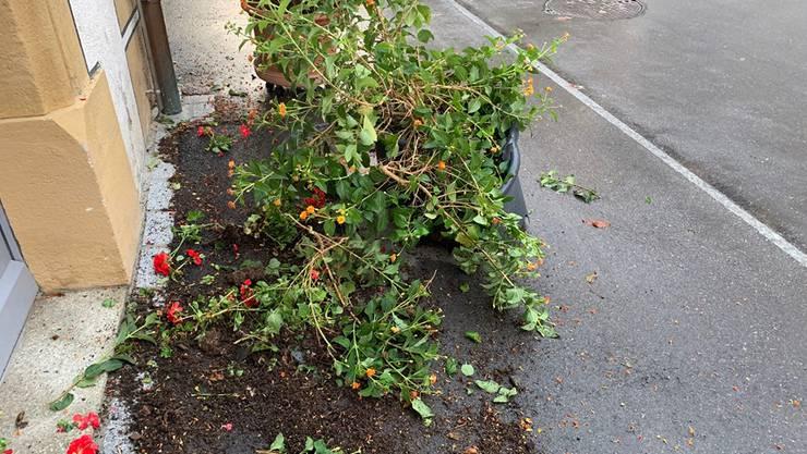 Nach dem Winzerfest in Döttingen kam es in Klingnau zu Vandalenakten. Die Regionalpolizei Zurzibiet erhielt noch keine sachdienlichen Hinweise dazu.