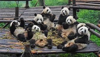 Sichuan: Die Provinz der Pandas