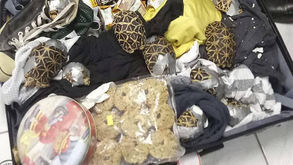 Der Zoll in Manila hat 1529 in Koffern versteckte und mit Klebeband verschnürte Schildkröten gefunden.