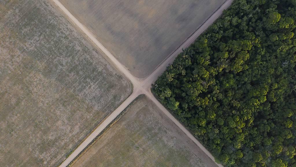 ARCHIV - Teil des Amazonas-Regenwaldes steht neben Sojafeldern. Indigene Gruppen aus Südamerika pochen vor dem der Weltnaturschutzunion (IUCN) darauf, 80 Prozent des Amazonasgebiets bis 2025 unter Schutz zu stellen. Die neuen geschützten Gebiete wollen sie außerdem selbst verwalten. Foto: Leo Correa/AP/dpa