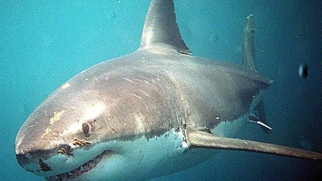 Ein Hai macht menschliche Beute vor der Insel Réunion (Symbolbild)
