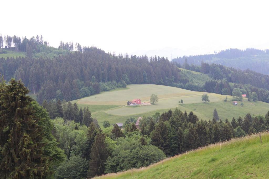 Hier sieht man eine Wiese, die frisch gemnäht wurde. Der Bauer hat die Jäger vorab nicht informiert. Gut möglich, dass hier ein Kitz verendet ist (© FM1Today/Fabienne Engbers//pd)
