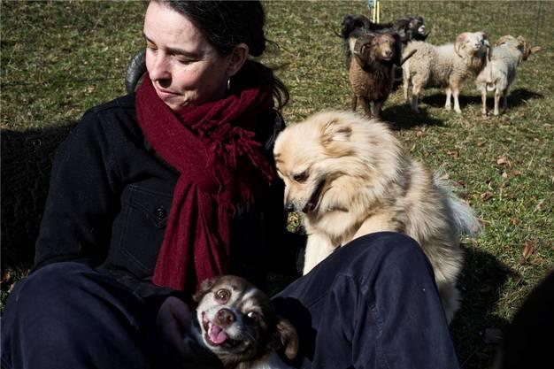 ... und mit den Hunden bei ihren Ouessant-Schafsböcken.