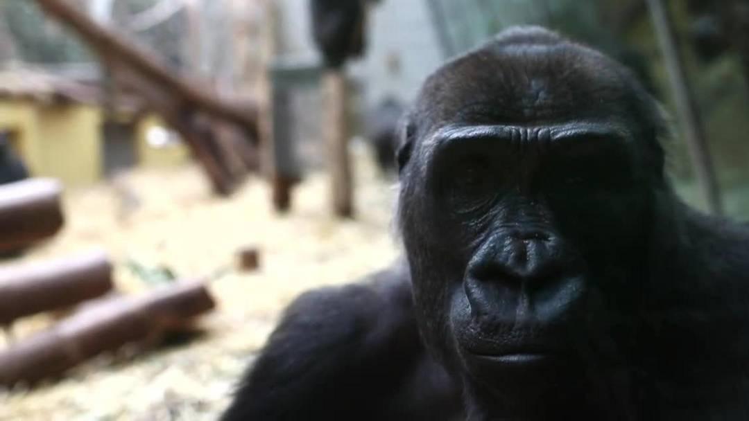 Stille im Zoo Zürich