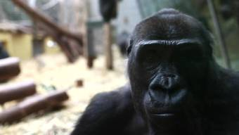 Stille statt Besucher: ungewohnte Bilder aus dem geschlossenen Zoo Zürich.