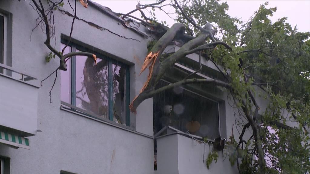 Baum kracht in Höngg in Wohnzimmer