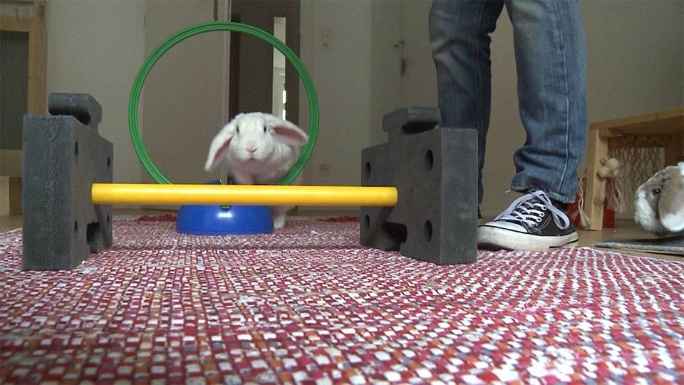 Kaninchen Training