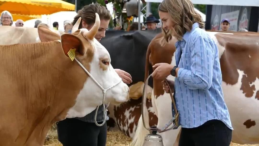 Die vom Publikum gewählte «Miss Chästag» 2019, die Simmentaler Kuh Miranda