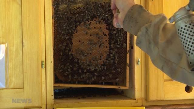 Bienen-Haltung soll gelernt sein: Imker warnen vor Schnellkursen