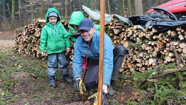 Rüfenach von links Alec, Jill und Dani Brunner pflanzen eine Edelkastanie