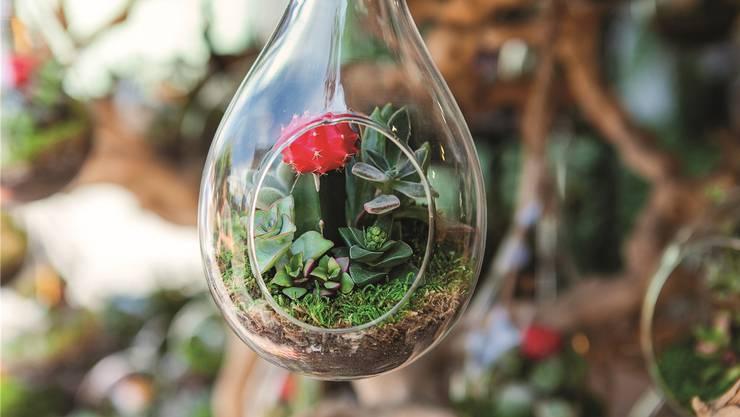 Mit den sogenannten Pflanzenterrarien kann man wunderbar experimentieren. Shutterstock