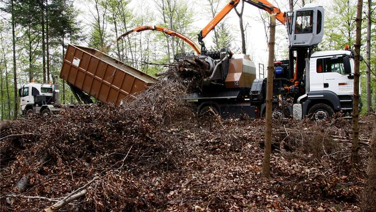 Da Nutzholz nicht mehr rentiert, ist Energieholz nun zum Standbein der regionalen Waldwirtschaft geworden.