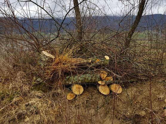 Wieselbauten Mühliweiher