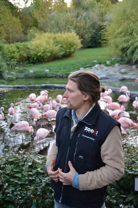 Christoph Rohrer mit Hintergrundinformationen zu Flamingos