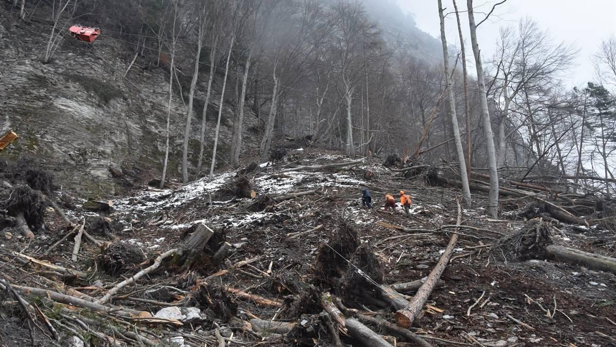 Beim Aufräumen der Sturmschäden ist ein Forstarbeiter von einem umfallenden Baum getroffen worden