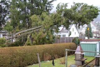 Umgefallener Baum blockiert SBB-Geleise.