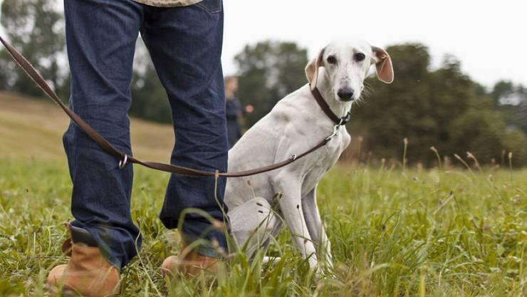 National- und Ständerat haben sich gegen die Kurse für Hundehalter ausgesprochen. (Archivbild)