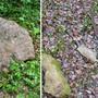 Zerstörte Gesteinsplatte in Ehrendingen