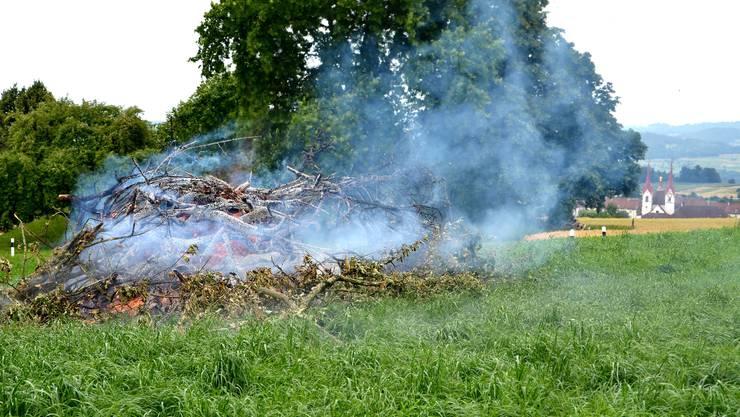 Im nördlichen Teil des Kantons muss jede mit Feuerbrand befallene Pflanze vernichtet werden.