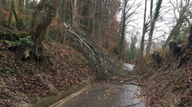 Am Kirschgartenweg in Aarau ist ein Baum umgestürzt.