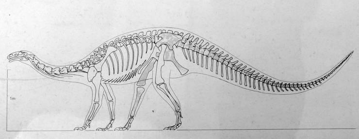 Skizze des Skeletts eines Plateosauriers