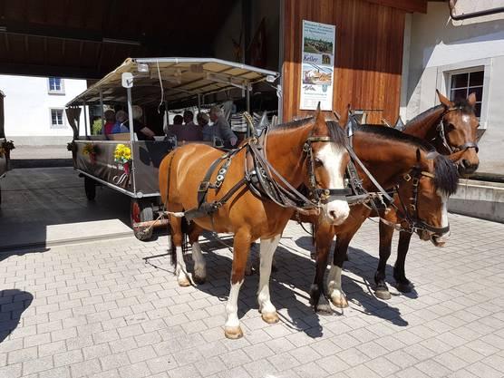 Jeweils drei Pferde zogen einen der beiden Wagen.