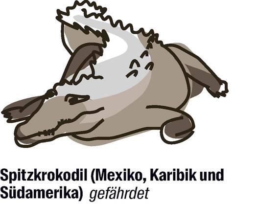 Vorschlag von Mexiko: der Artenschutz soll gelockert werden. Seitdem die Art von der Cites (Convention on International Trade in Endangered Species of Wild Fauna and Flora) streng geschützt wird, nehmen die Bestände wieder zu. Mexiko will nun den Schutz der Krokodile lockern, um einheimischen Bauern die Zucht und somit die Produktion von Krokodilhaut zu ermöglichen.
