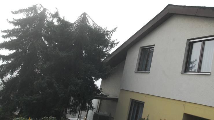 Bäume dürfen nur noch so hoch wie die Häuser sein.