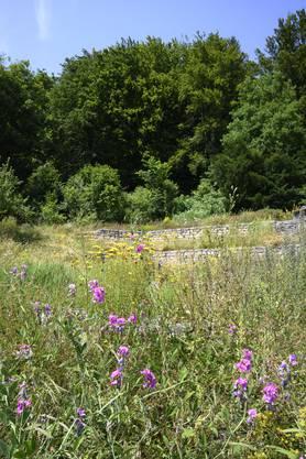 Naturwiese und Trockenmauer im Kehl.