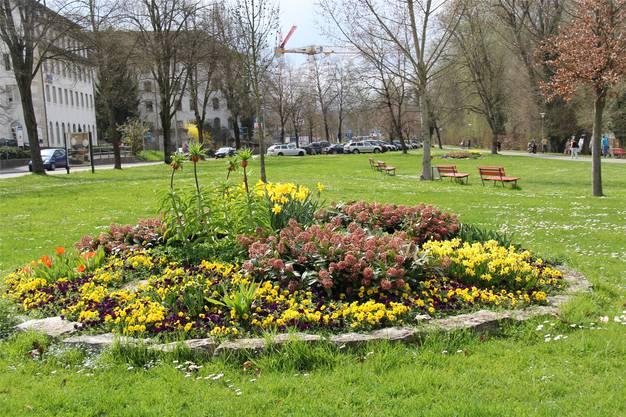 Farbenprächtige Oasen wie im Friedhof Rosengarten, auf der Wiese am Aareufer, im Kasinogarten oder neben dem Autobahnzubringer gibt es auf öffentlichem Grund in Aarau nicht allzu viele. kus