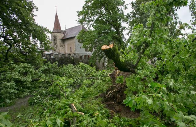 Sturm verwüstet Park vom Schloss Hallwyl