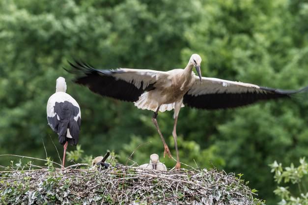 Alle 24 Horste im Zoo Basel sind besetzt.