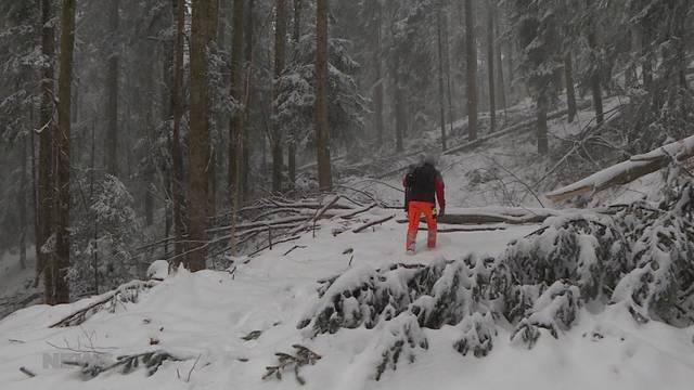 Schutzwald im Gürbetal rutscht ab