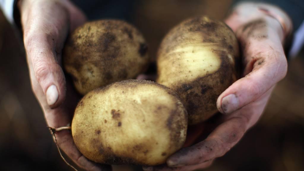 Die Kartoffelernte fällt dieses Jahr bedeutend geringer aus als in anderen Jahren (Symbolbild)