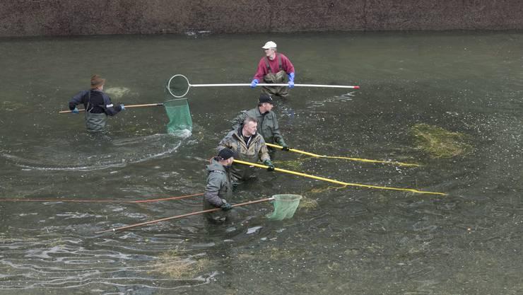 34000 Kubikmeter Wasser wurden abgelassen, um die Fische zu fangen.