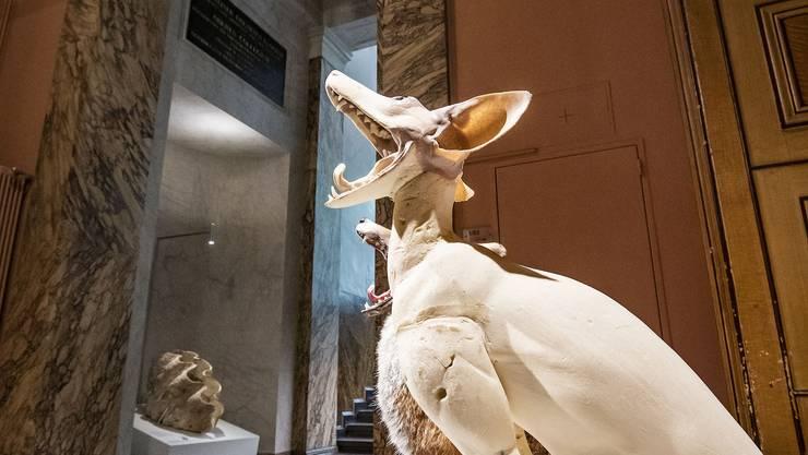 Ehre fürs Museum: Kurz vor der Abstimmung wird bekannt, dass das Museum über mehr Exponate verfügt als angenommen.