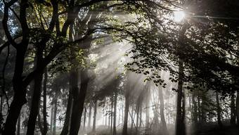 Zur Errichtung von Naturschutzgebieten im Wald ist seinerzeit in den Gemeinden viel Überzeugungsarbeit nötig gewesen. (Symbolbild)